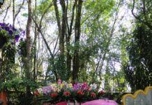 36ª Expoflora - Holambra